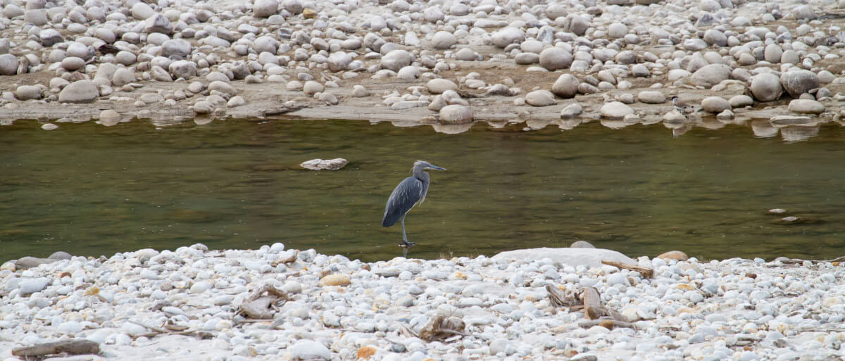 In Search of Heron and Cranes
